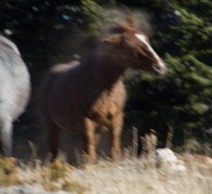 fail horse i