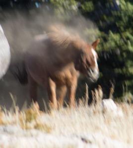 fail horse ii