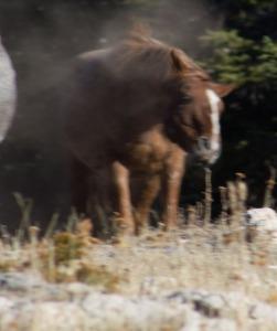 fail horse iii